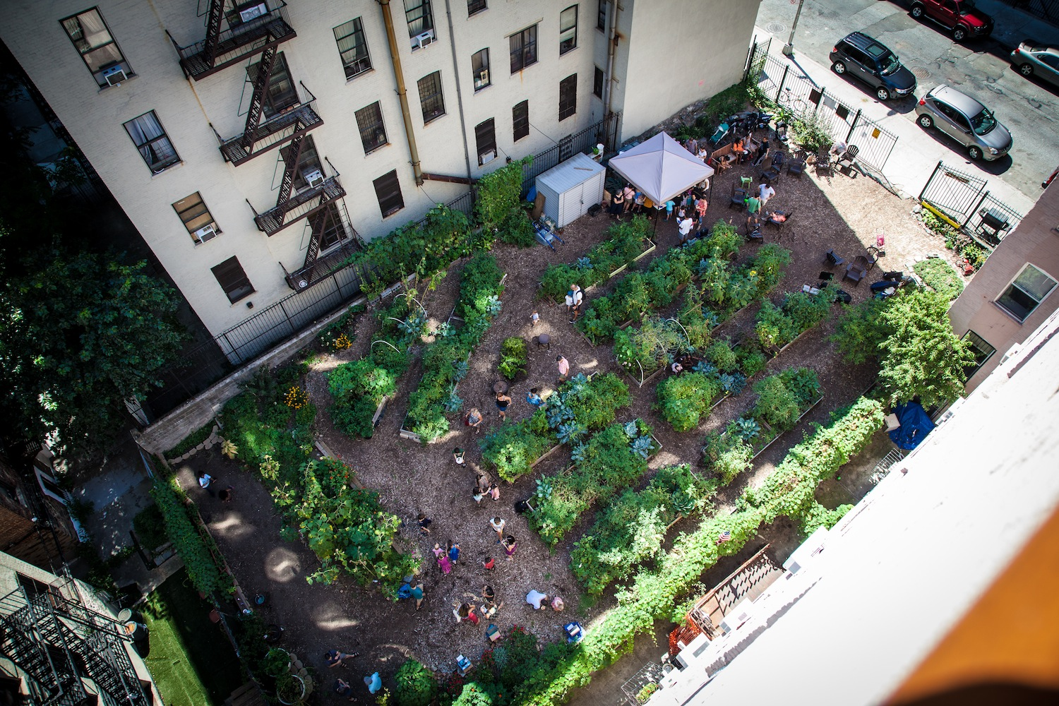Aerial view of Electric Ladybug Garden in Harlem