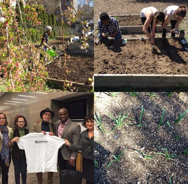 Four images of Maple Street Community Garden and its advocates