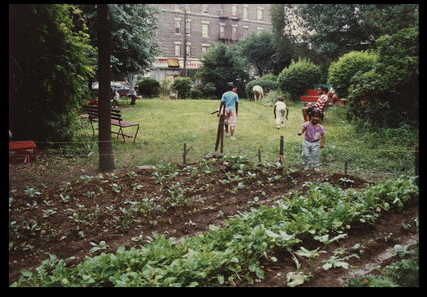 People walk in grass outside garden rows