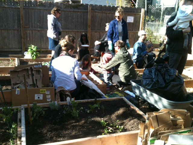 Planting beds at Java Street garden