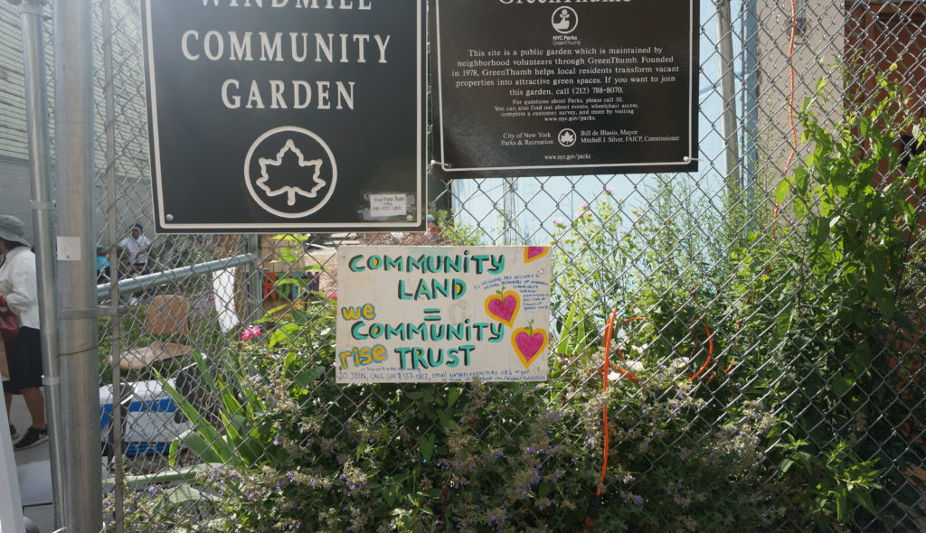 Windmill Garden: A Story of Collaboration – 596 Acres