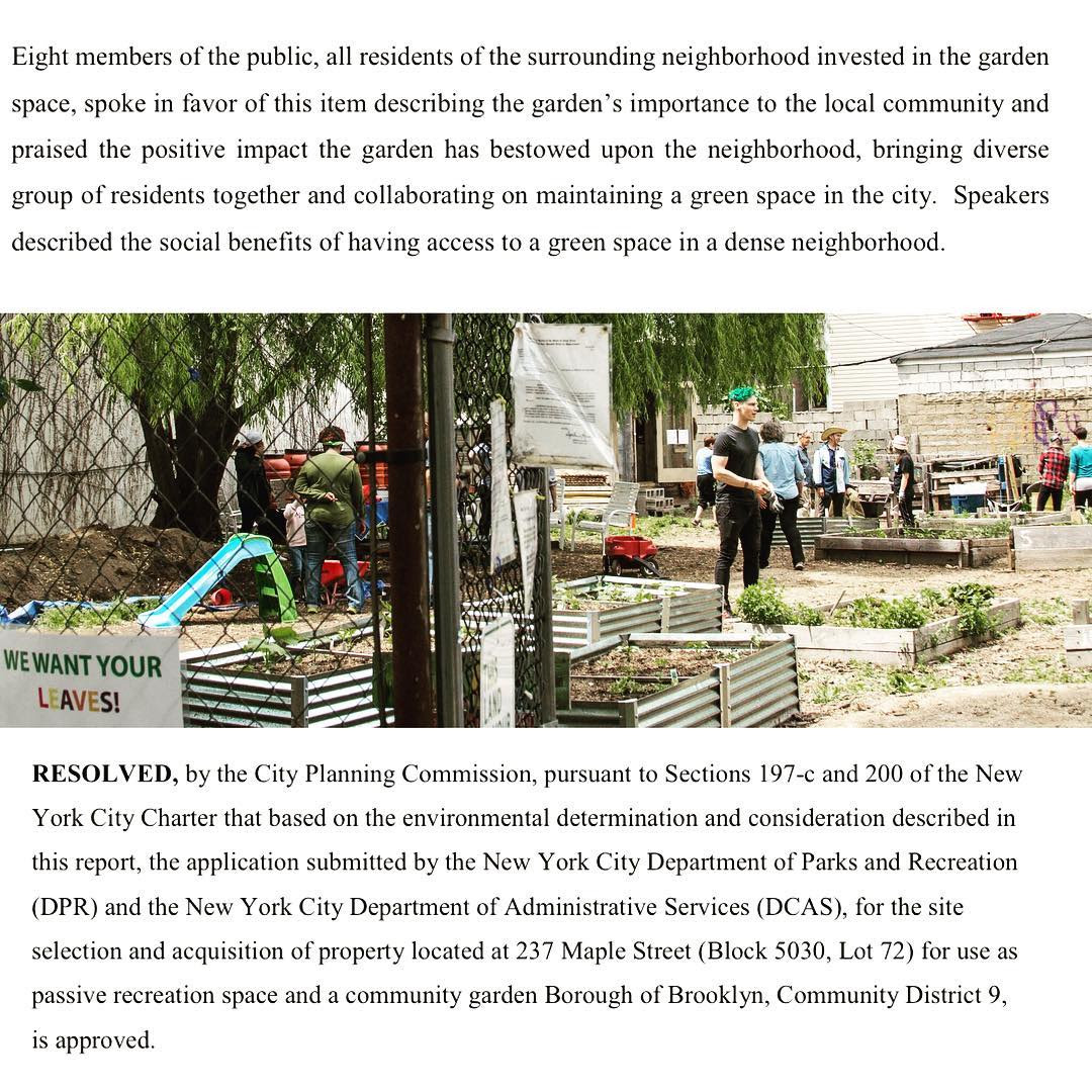 The NYC City Planning Commission voted YES to NYC Parks' proposal to acquire Maple Street Community Garden last week!